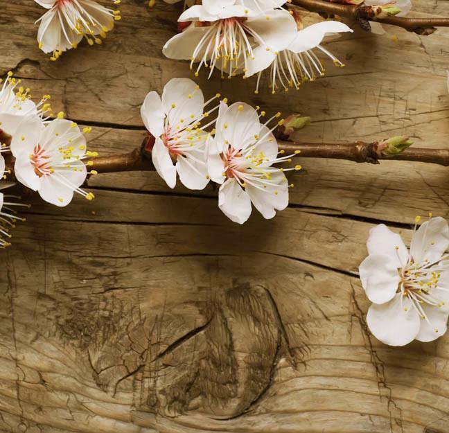 branch-of-cherry-blossom